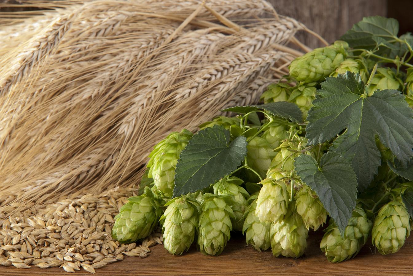 ingredients biere